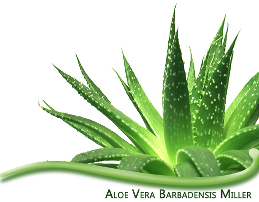 Herbalife Aloe Vera Produkt